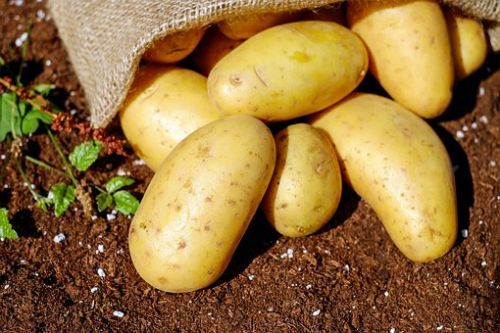 potatoes-1585075__340