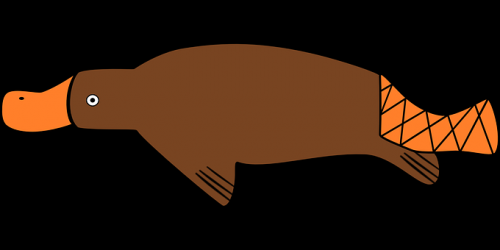duck-billed-platypus-161908__340